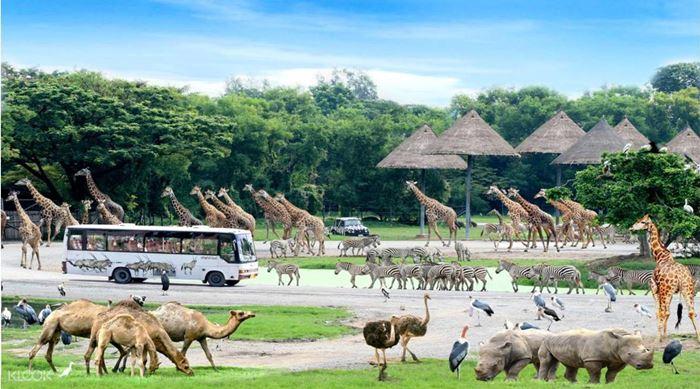 Giải trí tại công viên Safari World