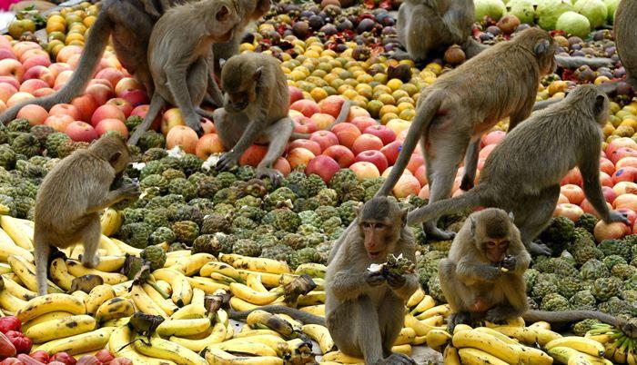 Lễ hội buffet cho Khỉ